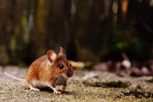 A cute mouse photo.