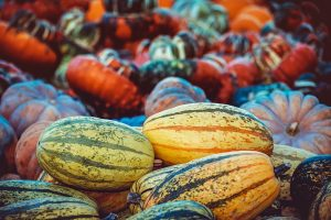 A pumpkin patch - one of the Thanksgiving events in Hamilton