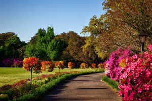 A beautiful garden trail