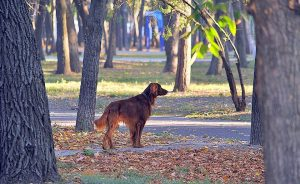 There are a lot of dog friendly activities in Hamilton