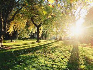 a sunny park