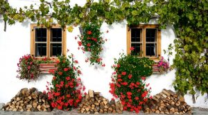 Beautiful house with lots of flowers