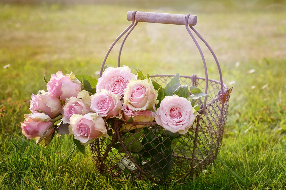 Pink roses in a basket, in a garden