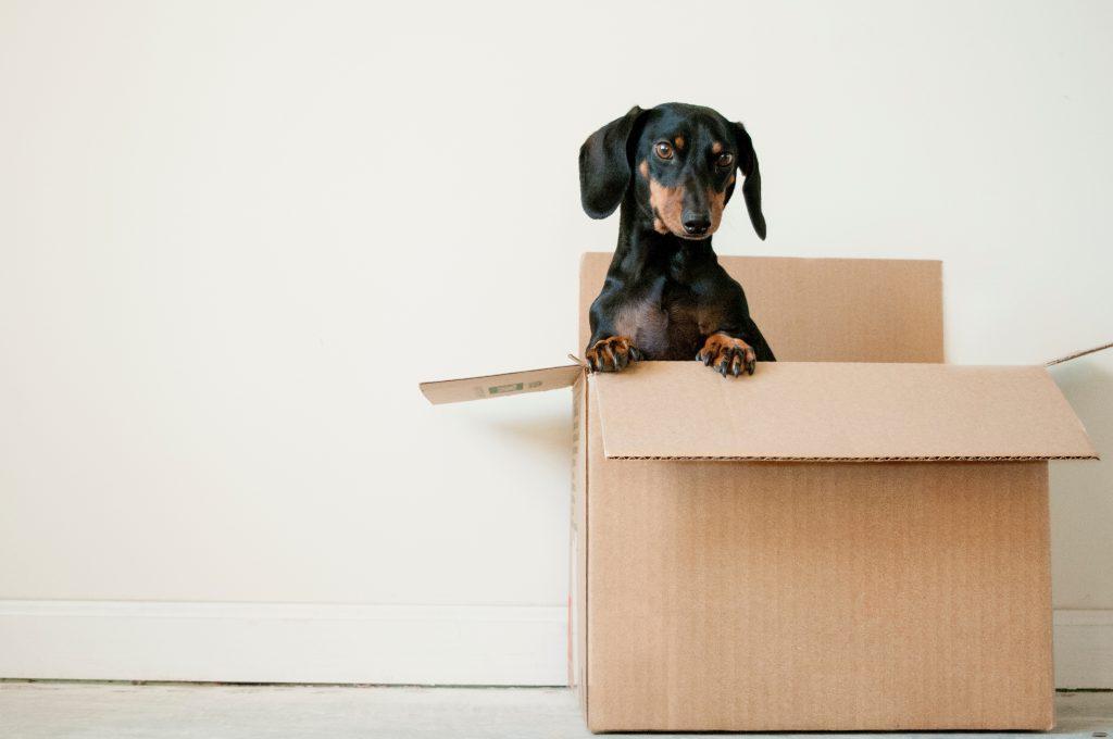 a puppy inside a cardoard box