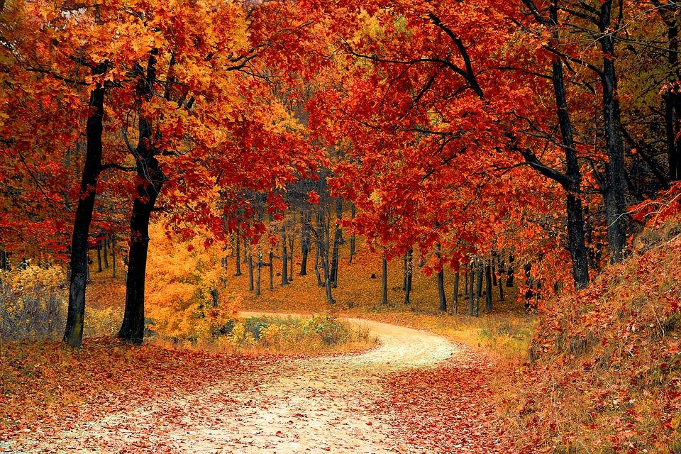 The most romantic fall walks in Hamilton
