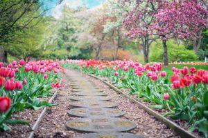 A path in garden
