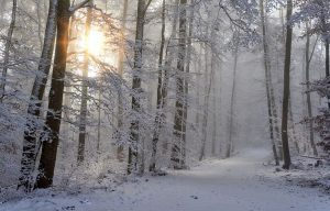 Moving in winter forest