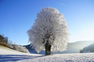 A tree in the winter
