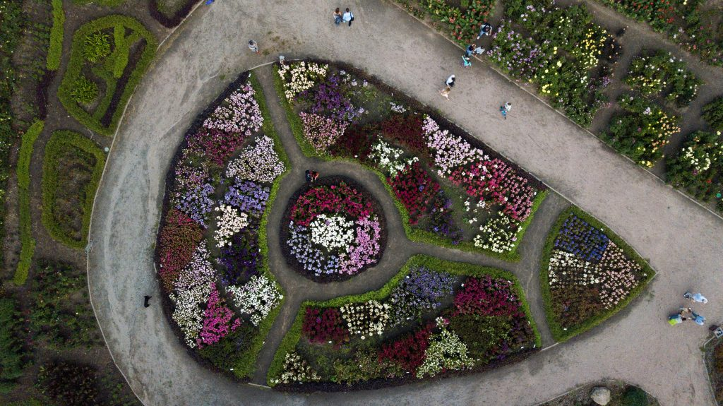 aerial view of a flower bed