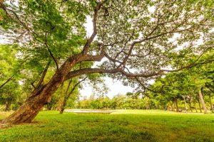 nature, park