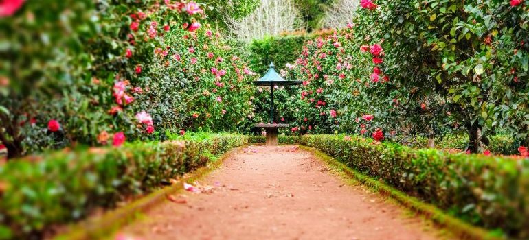 Path with flowers by the side