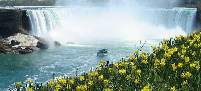 Niagara waterfalls with yellow flowers in front and a boat with tourists which sails not far from the waterfall.