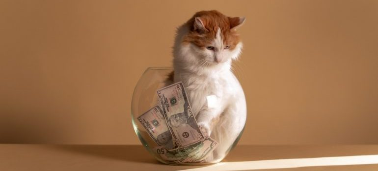 Cat and a pile of money in a jar